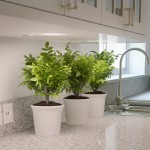 atlantic-salt-caesarstone-countertop-4